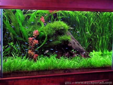 D cor aquarium forum for Decoration pour aquarium d eau douce
